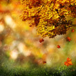 Autumn, abstract natural backgrounds for your design — Foto de Stock