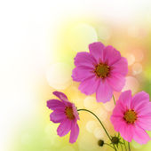 Abstract violet flowers border — Stock Photo