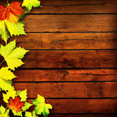 Leaves. Abstract autumn backgrounds for your design — Stock Photo