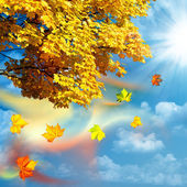 Autumn, abstract natural backgrounds for your design — Foto Stock