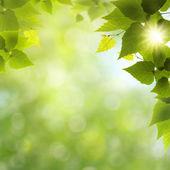 Siema zabawny ładny dzień! streszczenie tło naturalne — Zdjęcie stockowe
