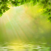 Sunny day on the forest lake, abstract natural backgrounds — Stock Photo