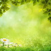 Schoonheid natuurlijke achtergronden voor uw ontwerp — Stockfoto