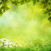 您的设计的之美自然背景 — 图库照片