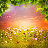 Mystical evening on the meadow. — Stock Photo