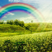 Rainbow on the meadow. — Stok fotoğraf
