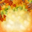 Natural beauty. Autumnal abstract backgrounds for your design — Stock Photo