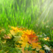 Softness. Autumnal abstract natural backgrounds — Stockfoto