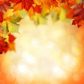 Natural beauty. Autumnal abstract backgrounds for your design — Stok fotoğraf