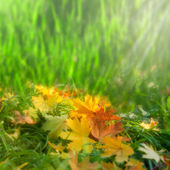 Softness. Autumnal abstract natural backgrounds — Stock Photo