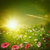 Brumosa mañana en el prado. — Foto de Stock
