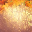 Abstract autumnal backgrounds for your design — Stockfoto