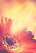 Arrière-plans florales abstraits — Photo