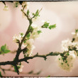 Sakura flowers. Abstract asian grungy backgrounds for your desig — Stock Photo