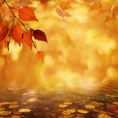 Abstract autumnal backgrounds with petzval lens bokeh — Stock Photo