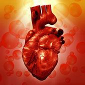 Human Heart. — Stock Photo