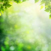 Mgliste rano w lesie, streszczenie tło naturalne — Zdjęcie stockowe