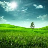 Prado de belleza. paisaje de verano resumen para su diseño — Foto de Stock
