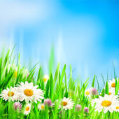 Chamomile symphony. Abstract natural backgrounds for your design — Stock Photo
