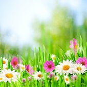 Beauty meadow. Abstract natural backgrounds for your design — 图库照片