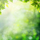 Miracle day on the summer meadow. Abstract natural backgrounds — Stock Photo