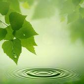 Rosée du matin. fonds naturels résumé pour votre conception — Photo