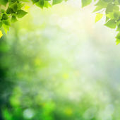 Beauty sunny day in the forest, abstract natural backgrounds — 图库照片