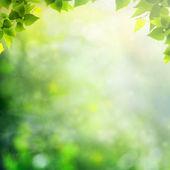 Skönhet solig dag i skogen, abstrakt naturliga bakgrunder — Stockfoto