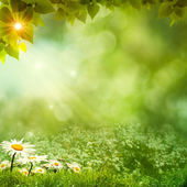 Sunny day on the meadow, environmental backgrounds — Stock Photo