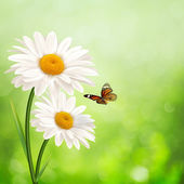 Happy meadow. Abstract summer backgrounds with daisy flowers — Stock Photo