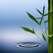 Bamboo grass with dew droplets. Abstract environmental backgroun — Stock Photo #24471825