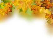 Autumnal foliage against white backgrounds — Stock Photo