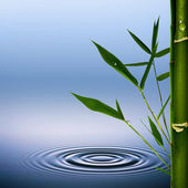 Bamboo grass with dew droplets. Abstract environmental backgroun — Stock Photo