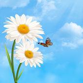 Unter dem blauen himmel. natürliche abstrakt mit daisy fl — Stockfoto