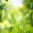 Green world, abstract environmental backgrounds for your design — Stock Photo #25244439