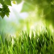 Green world, abstract environmental backgrounds for your design — Stock Photo
