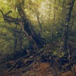 Summer time in the forest, natural backgrounds for your design — Stock Photo