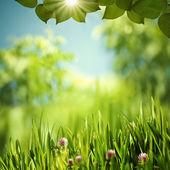 Monde vert, fonds environnementales résumé pour votre conception — Photo