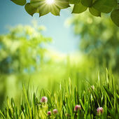 Mundo verde, abstractos fondos ambientales para su diseño — Foto de Stock
