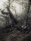 θερινή ώρα στο δάσος, υπέρυθρες χρωματιστούν φυσικό υπόβαθρο — Φωτογραφία Αρχείου