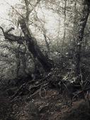 Yaz saati ormandaki kızılötesi doğal arka planı renkli — Stok fotoğraf