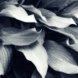 Abstract foliage pattern for your design — Stock Photo