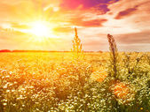 Late sunset on the summer meadow, natural landscape — Stock Photo