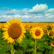 Golden flowers, optimistic summer landscape for your design — Stock Photo
