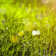 Green grass, abstract natural backgrounds — 图库照片