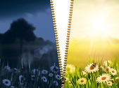 Day and night. Natural backgrounds with beauty chamomile flowers — Stock Photo