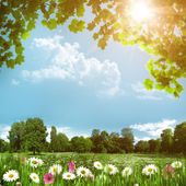 Beauty meadow with daisy flowers, abstract natural backgrounds — Stock Photo