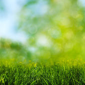 Green grass on the meadow, environmental backgrounds — Stock Photo