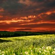 Stock Photo: Dramatic sunset over hilly meadow, environmental backgrounds