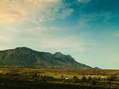 Vineyard on the hilly mountain, environmental backgrounds — Stock Photo